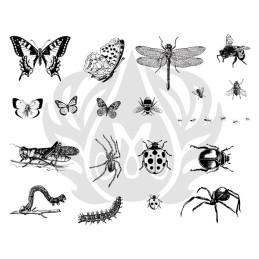 DSS-0113 Bugs